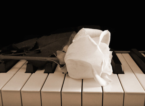 White rose on a piano keyboard
